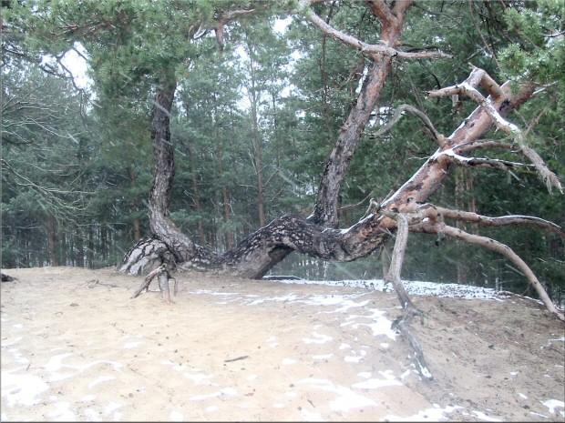 Erster Schnee November 2008 im Spreewald, erster Schneefall